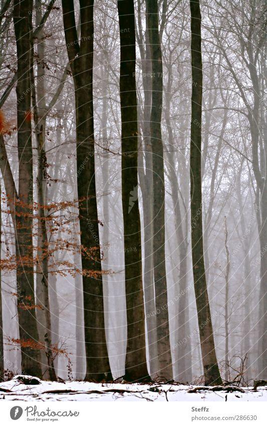 Winterwald Natur Nebel Schnee Baum Zweige u. Äste Wald Waldrand Schneelandschaft Nebelwald kalt natürlich schön braun grau Stimmung ruhig Winterstimmung
