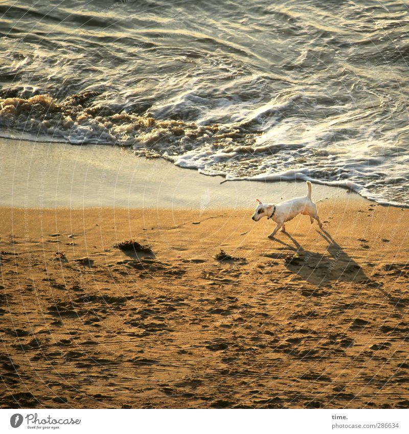Auf Streife Hund Ferien & Urlaub & Reisen Wasser Meer ruhig Tier Ferne Strand Bewegung Küste gehen Sand Freizeit & Hobby Wellen laufen nass