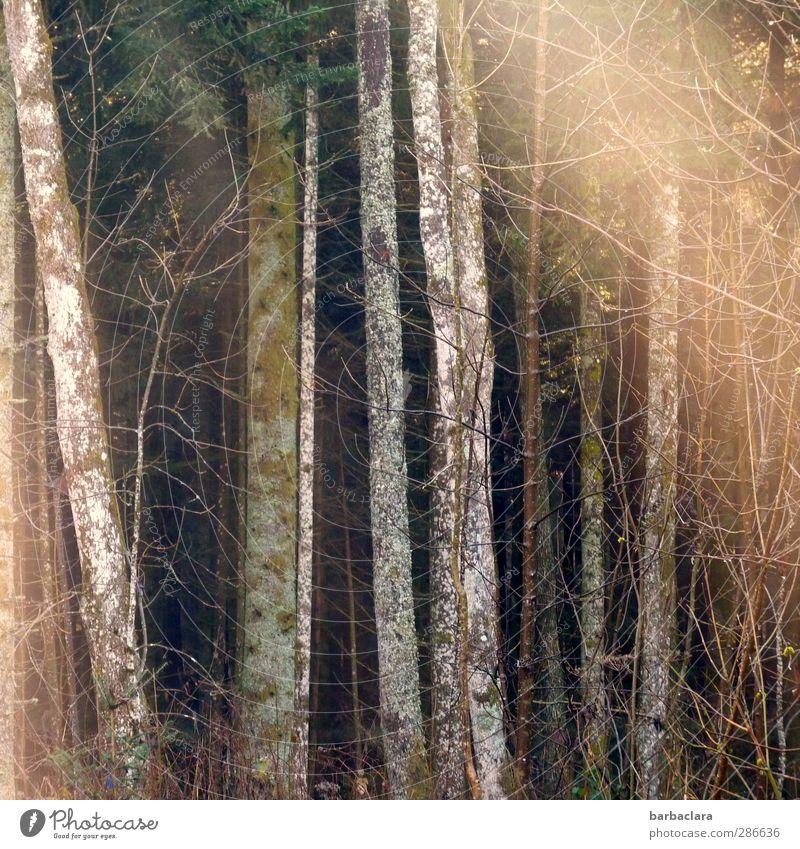 Baumleuchten Natur Baum Sonne ruhig Wald Umwelt dunkel Wärme Herbst Gefühle hell Stimmung leuchten Sträucher Hoffnung Freundlichkeit