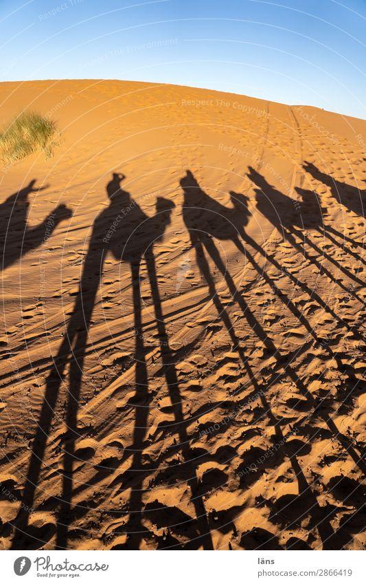Karawane Mensch Leben Menschengruppe Umwelt Landschaft Urelemente Sand Himmel Klima Schönes Wetter Wüste Sahara gehen Beginn Bewegung einzigartig Reiten