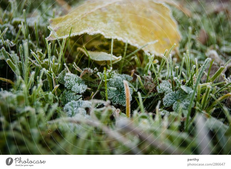 Taufrost grün Blatt Winter gelb kalt Herbst Gras braun Fluss