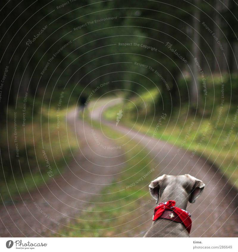 es geht ihr gut Hund Natur Tier ruhig Wald Umwelt dunkel Herbst Leben Wege & Pfade Stimmung Erde Pause Kontakt Konzentration Gelassenheit