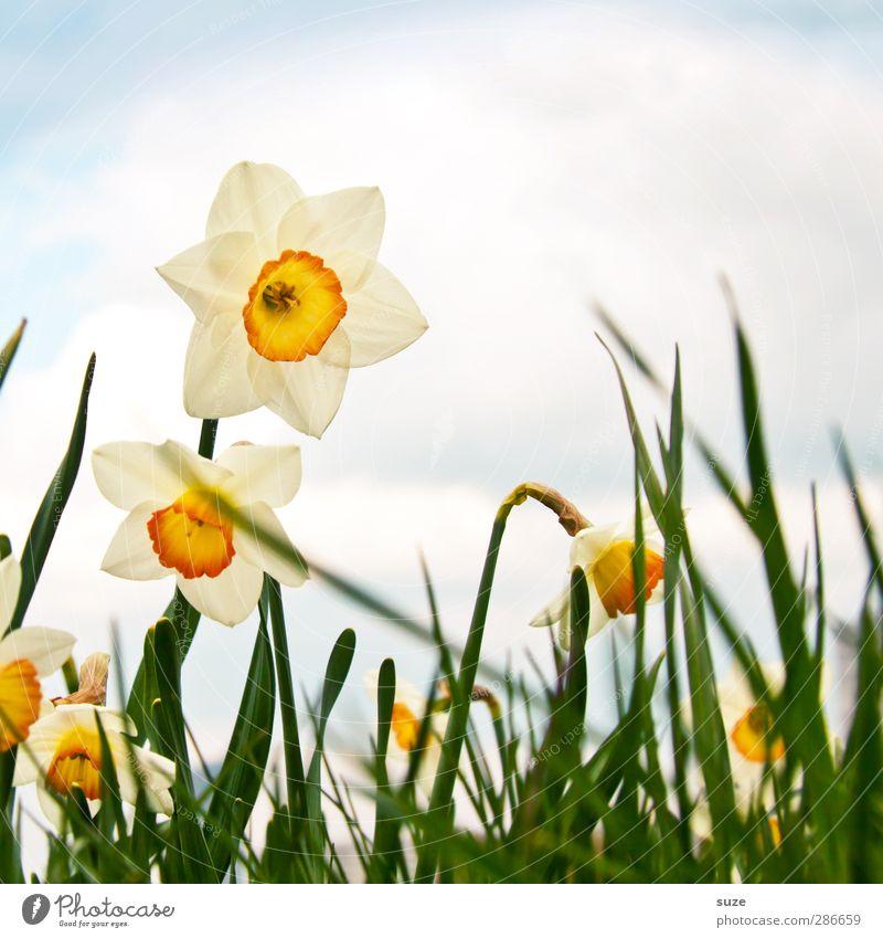 Stell dir vor es wär Frühling ... Himmel Natur Pflanze schön Blume Wolken Freude Umwelt Gras Blüte natürlich Glück Luft Wachstum Fröhlichkeit