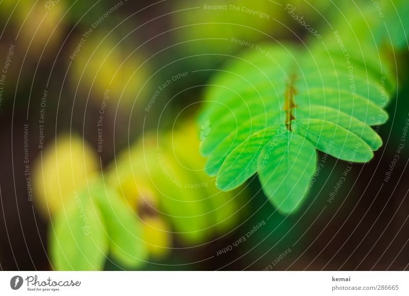 Grüne Kraft Natur grün Pflanze Blatt Wald Umwelt Herbst Wachstum frisch Grünpflanze Wildpflanze leuchtende Farben leuchtend grün
