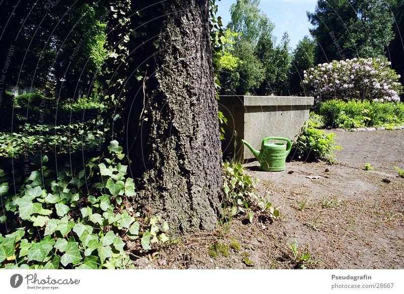 grüne Gießkanne aufm Friedhof Sommer Sonne Baum Park Sträucher Kitsch Brunnen Grünpflanze Efeu
