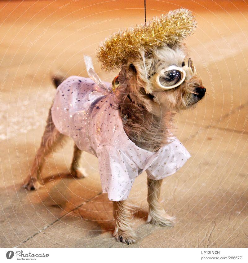 TRUE STORY. VIII Hund Tier Party Kreativität Haustier bizarr Halloween verkleiden Nachtleben verkleidet ausgehen Gassi gehen