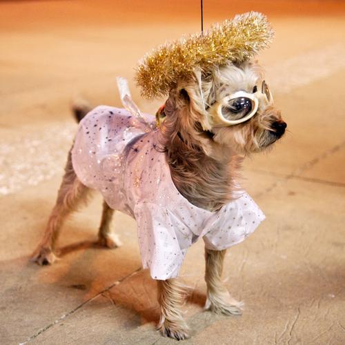 TRUE STORY. VIII Nachtleben Halloween Tier Haustier Hund 1 bizarr Kreativität verkleiden verkleidet ausgehen Gassi gehen Farbfoto Außenaufnahme Abend