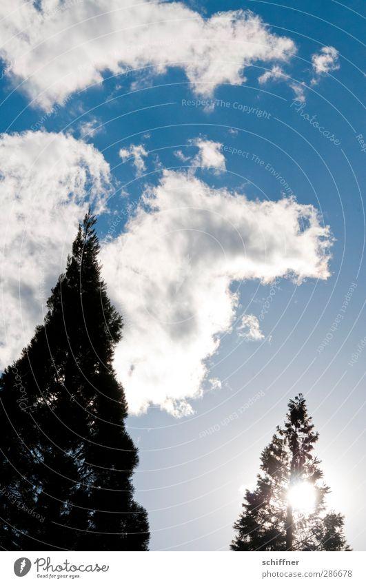 Kamel in der Oase bei tiefstehender Sonne Umwelt Natur Himmel Wolken Schönes Wetter Pflanze Baum Grünpflanze blau schwarz weiß Wolkenbild Wolkenhimmel