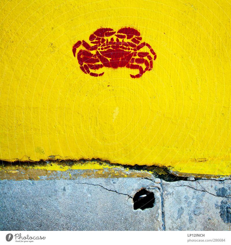 Mr. Crab. IX Kunst Tier Graben 1 Zeichen gelb Appetit & Hunger Krebs Fisch Lebensmittel Krustentier Farbfoto Außenaufnahme Menschenleer Tag