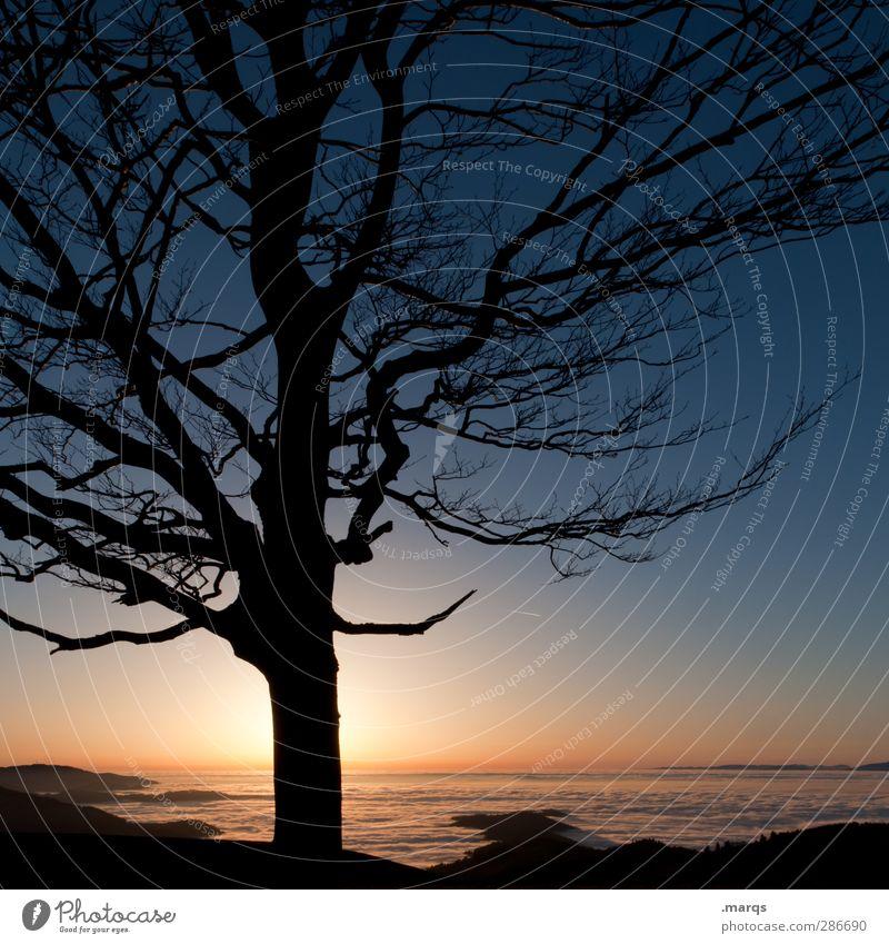 Untergang Natur Ferien & Urlaub & Reisen schön Baum ruhig Landschaft Ferne Umwelt dunkel Berge u. Gebirge Herbst Leben Freiheit Horizont Stimmung Klima