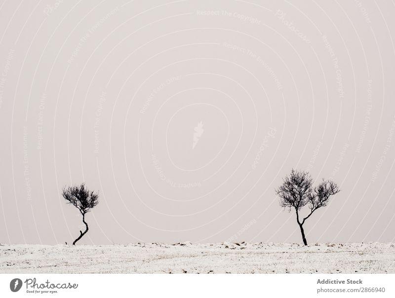 Einsame Bäume zwischen verschneitem Feld und bewölktem Himmel Baum Schnee Wolken Winter Island Einsamkeit Holz Wiese kalt Himmel (Jenseits) Jahreszeiten