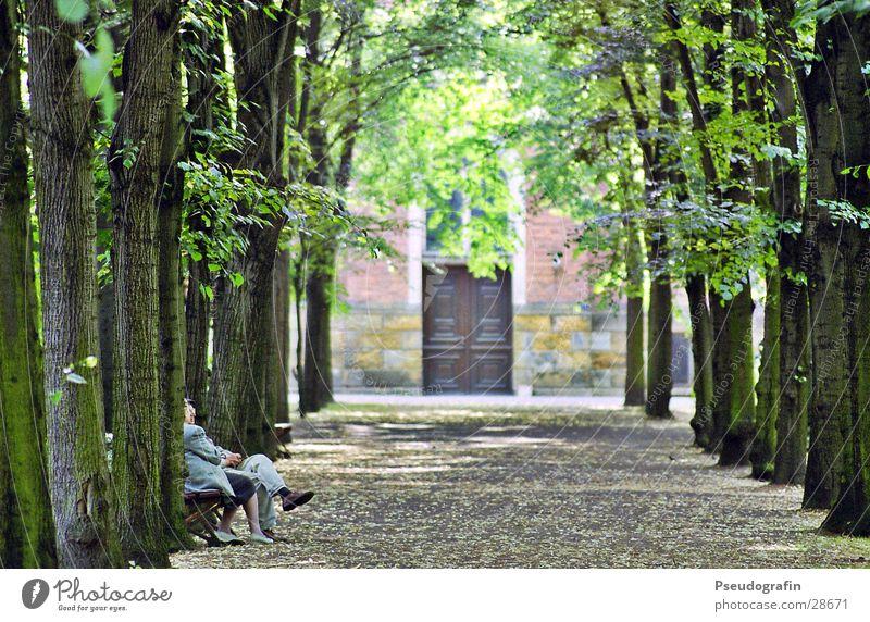 Allee Mensch Frau Mann alt Baum Blatt Erwachsene Senior feminin sprechen Wege & Pfade Paar Park maskulin sitzen warten