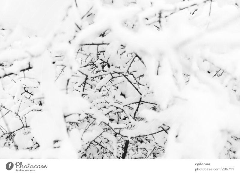 White Noise Natur weiß Baum ruhig Winter Umwelt kalt Schnee Wege & Pfade träumen Eis Zukunft ästhetisch Sträucher planen Wandel & Veränderung