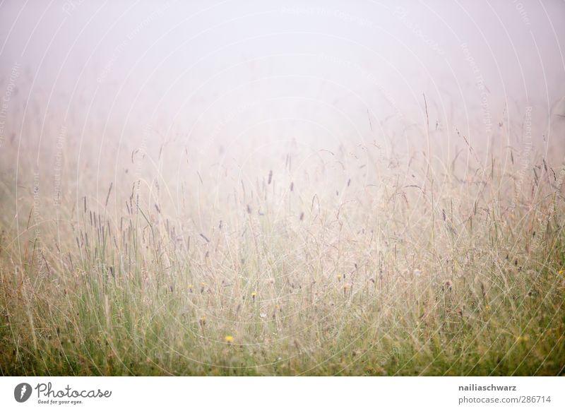 Nebel Natur blau grün schön Sommer Pflanze Blume Landschaft Wiese kalt Gras Stimmung natürlich Regen Feld Erde