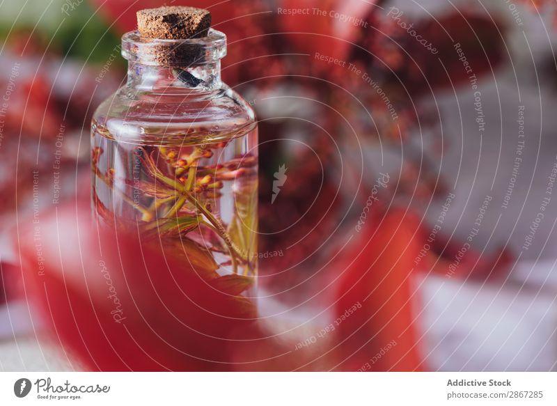 Flasche mit frischer Pflanze in Flüssigkeit zwischen den Blättern Erdöl aromatisch liquide Blatt Zusammensetzung Glas rot Stempel Blütenblatt nass Parfum
