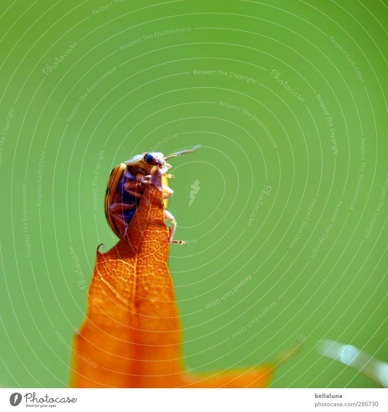 Anton ... Umwelt Natur Pflanze Tier Herbst Wetter Schönes Wetter Gras Blatt Garten Park Wiese Wildtier Käfer 1 krabbeln sitzen braun grün rot schwarz