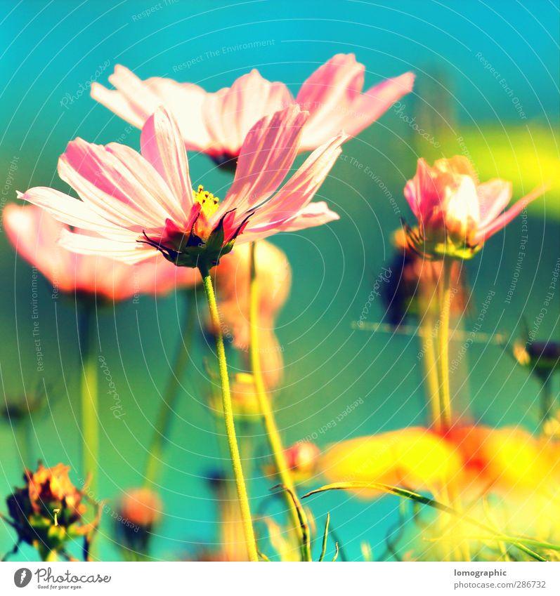 Florasoft I Natur Sommer Pflanze Blume Blatt Landschaft gelb Wiese Gras Frühling Blüte Garten Park rosa Blühend türkis