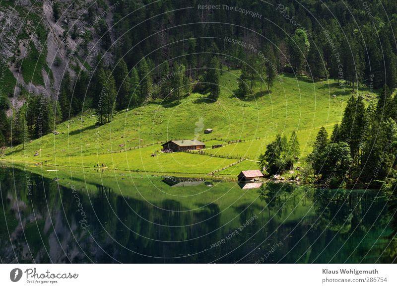 Fluchtpunkt Natur Ferien & Urlaub & Reisen grün Sommer Landschaft Erholung Wald Ferne dunkel Wiese Berge u. Gebirge grau See wandern Tourismus Abenteuer