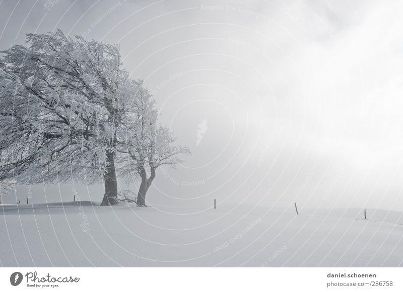 nächste Woche gibts Schnee !! Ferien & Urlaub & Reisen Winter Winterurlaub Berge u. Gebirge wandern Klima Wetter Wind Eis Frost Schneefall Baum hell weiß