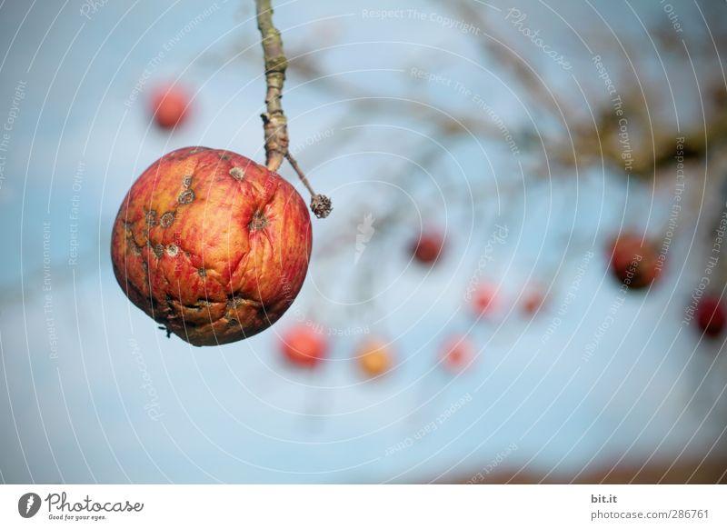 ich will durchhängen - bis zum nächsten Frühjahr Himmel Natur blau alt Sommer Pflanze rot Wiese Herbst Garten Feld Frucht Schönes Wetter Wandel & Veränderung Apfel Krankheit