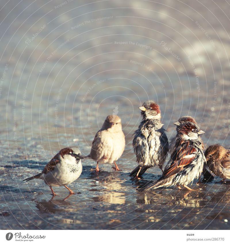 Rasselbande Natur Tier Umwelt Straße Herbst Spielen lustig klein Vogel Schwimmen & Baden braun natürlich Wildtier wild dreckig authentisch