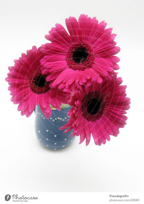 Blumenvase Valentinstag Muttertag Pflanze Sommer Blumenstrauß rosa rot Vase Gerbera Farbfoto mehrfarbig Innenaufnahme Menschenleer Hintergrund neutral Tag