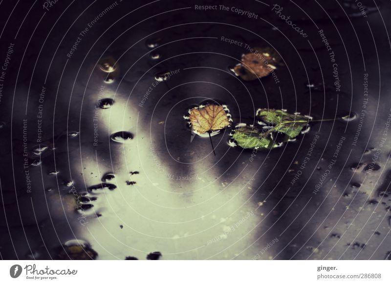 Waldmeerchen Umwelt Natur Erde Wasser Himmel Herbst Regen Blatt dunkel glänzend Traurigkeit Reflexion & Spiegelung alt dreckig Stein Im Wasser treiben Pfütze