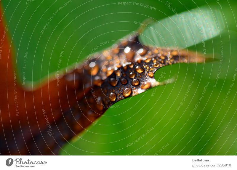 Kein Marienkäfer! Umwelt Natur Pflanze Wasser Wassertropfen Sonnenlicht Herbst Wetter Schönes Wetter schlechtes Wetter Regen Gras Blatt Garten Park Wiese Wald