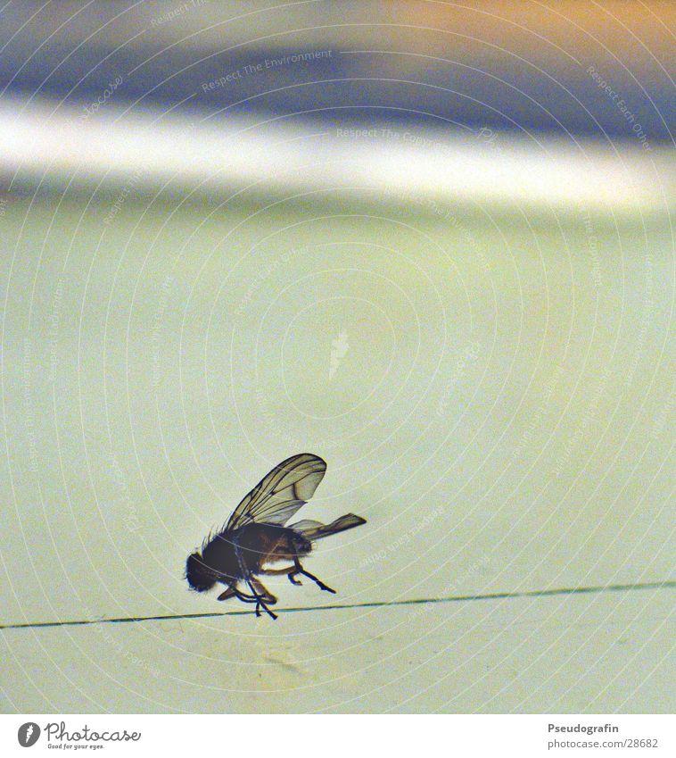Bruchlandung Fliege Flügel Tod Ende Leuchttisch Insekt Farbfoto Gedeckte Farben Makroaufnahme Menschenleer Schwache Tiefenschärfe
