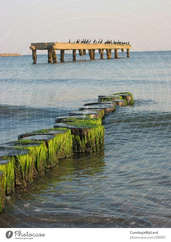 Kormorane Meer Wellen Algen Buhne