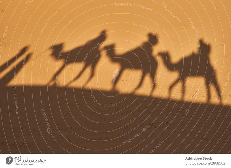 Schatten auf Sand von Kamelen und Menschen Wüste Marrakesch Marokko