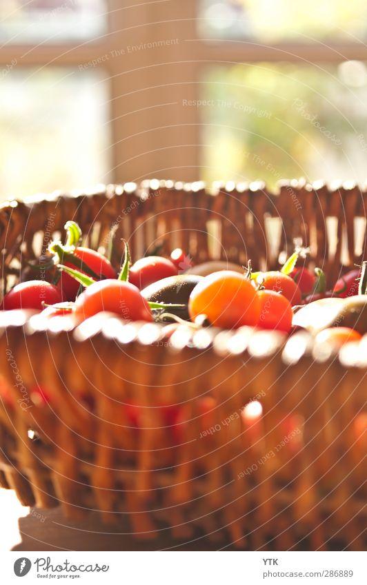 Tomato Harvest Lebensmittel Gemüse Frucht Ernährung Essen Pflanze Sommer Blatt Nutzpflanze kaufen Gesunde Ernährung Tomate Strauchtomate Ernte Korb vitaminreich