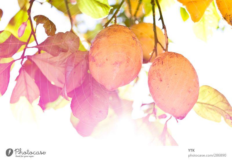 If life gives you lemons.... Lebensmittel Frucht Ernährung Essen Italienische Küche Natur Pflanze Wolkenloser Himmel Sonne Sonnenlicht Sommer Klima