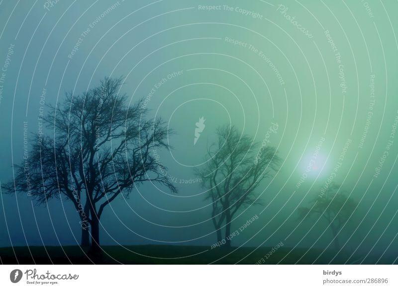 Sonne vs. Nebel Natur blau grün Baum Sonne Farbe ruhig Landschaft Herbst träumen Stimmung außergewöhnlich Klima Nebel leuchten ästhetisch