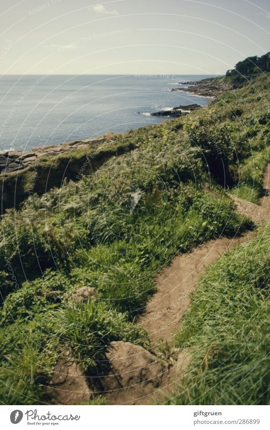 path to follow Umwelt Natur Landschaft Pflanze Urelemente Erde Wasser Himmel Horizont Sommer Schönes Wetter Gras Sträucher Grünpflanze Wiese Hügel Wellen Küste