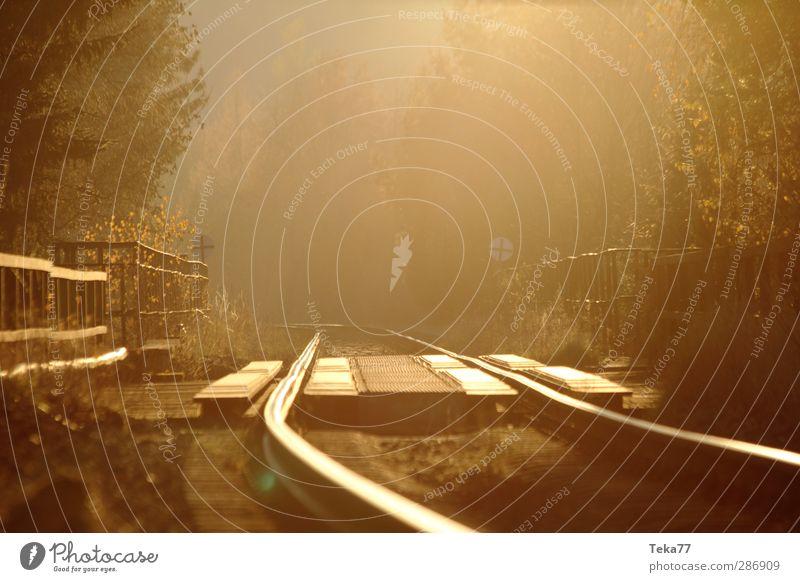Herbstgoldnebelbahn Natur Sonne Einsamkeit Winter Landschaft Wald Umwelt elegant Verkehr Schönes Wetter Abenteuer Eisenbahn einzigartig Güterverkehr & Logistik