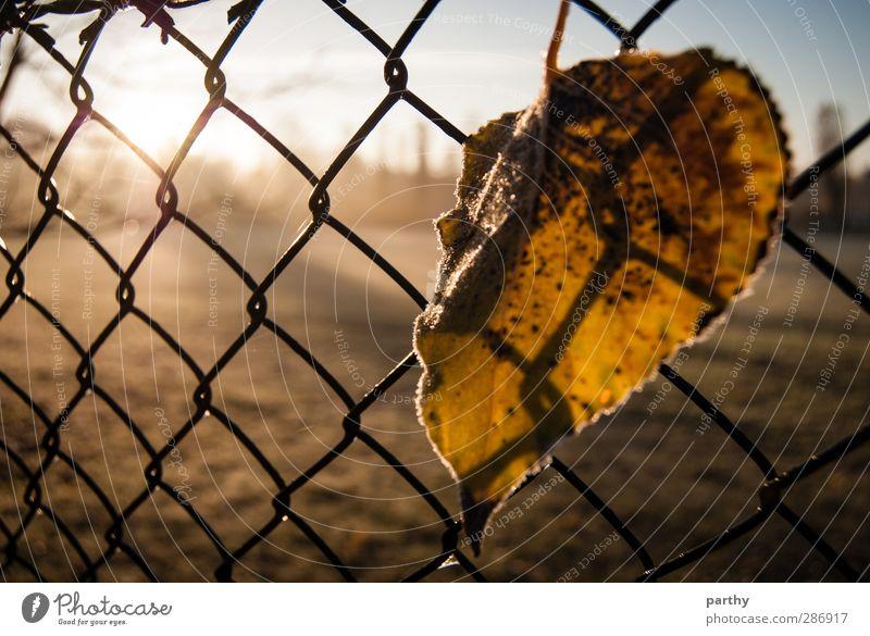 Winterlaub 2 Natur Herbst Gras Blatt blau braun gelb grün Zaun Maschendraht Maschendrahtzaun Farbfoto Gedeckte Farben Außenaufnahme Nahaufnahme Morgen Licht