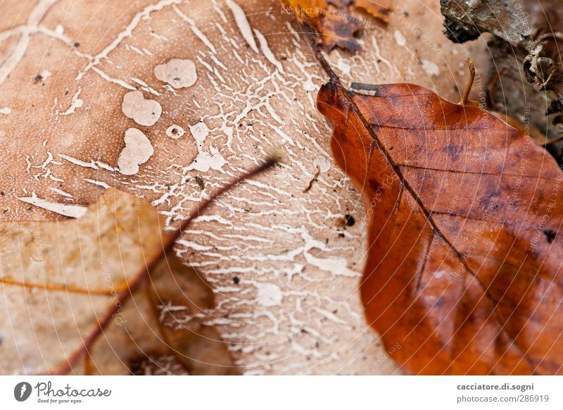 structures Natur schön Blatt Einsamkeit ruhig Herbst oben träumen braun Zusammensein natürlich Idylle Wandel & Veränderung Hoffnung Vergänglichkeit einfach