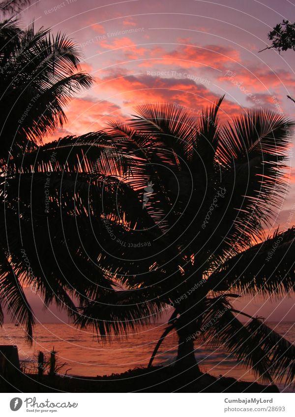 Sonnenuntergang II Palme Meer Strand Seychellen violett Gegenlicht