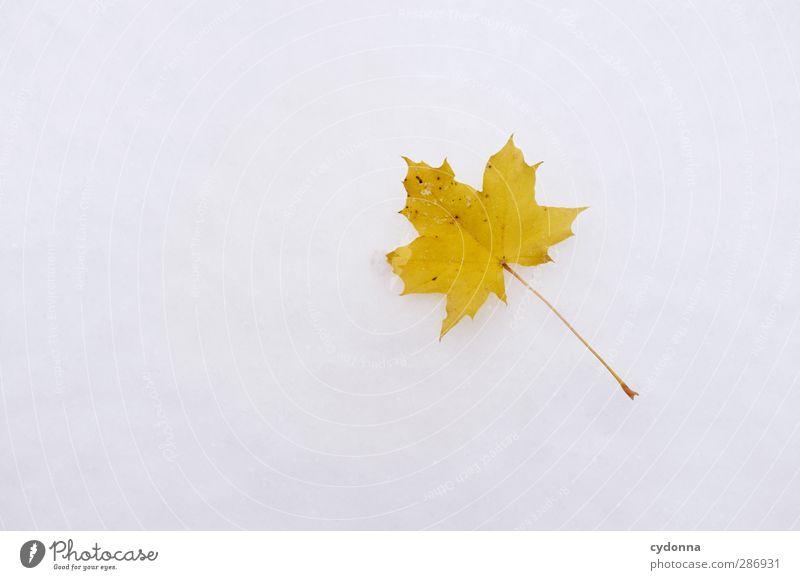 Herbstblatt im Schnee Natur Farbe Blatt Einsamkeit ruhig Winter gelb Umwelt Leben Freiheit träumen Eis Klima Idylle