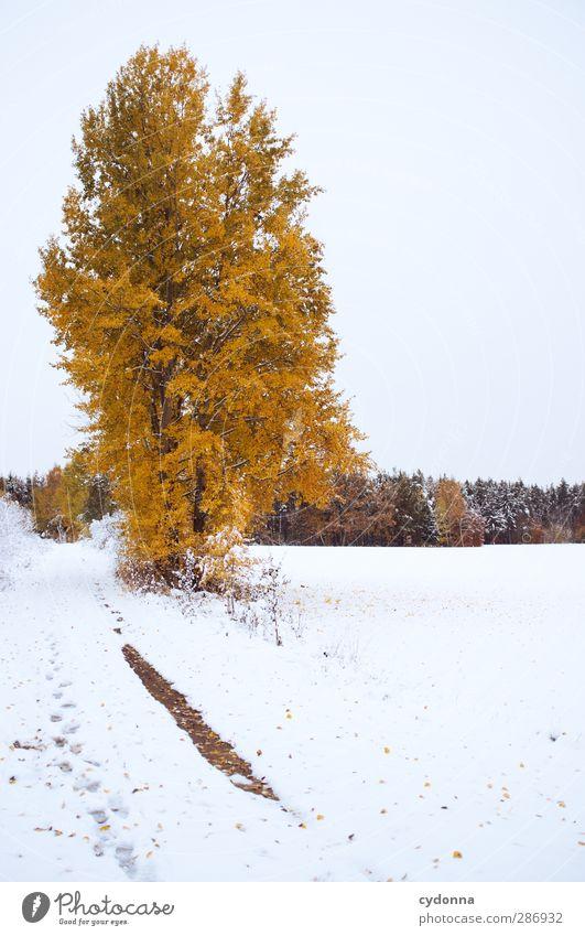Fire on Ice Himmel Natur schön Baum Farbe Einsamkeit ruhig Winter Landschaft Wald Umwelt Wiese kalt Herbst Leben Schnee