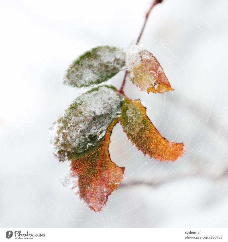 Widerstandsfähig Umwelt Natur Herbst Winter Klima Klimawandel Eis Frost Schnee Blatt ästhetisch einzigartig entdecken Idylle kalt Leben ruhig schön Schutz