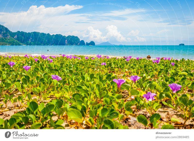 Blumen am Krabi Beach, Thailand schön Erholung Ferien & Urlaub & Reisen Tourismus Sommer Sonne Strand Meer Insel Berge u. Gebirge Natur Landschaft Pflanze Sand