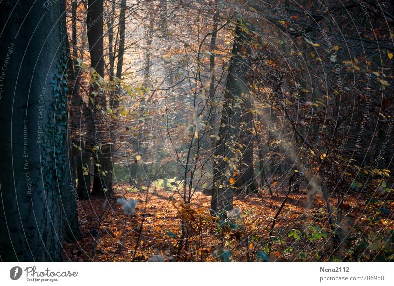 Wilder Wald Natur Pflanze Baum Blatt Landschaft Umwelt Herbst braun natürlich orange Erde wild authentisch Schönes Wetter Sträucher