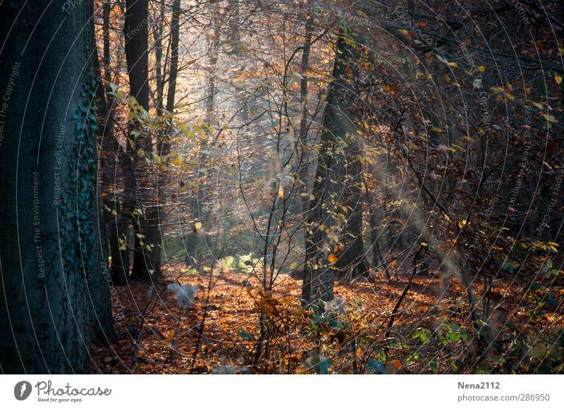 Wilder Wald Natur Pflanze Baum Blatt Landschaft Wald Umwelt Herbst braun natürlich orange Erde wild authentisch Schönes Wetter Sträucher
