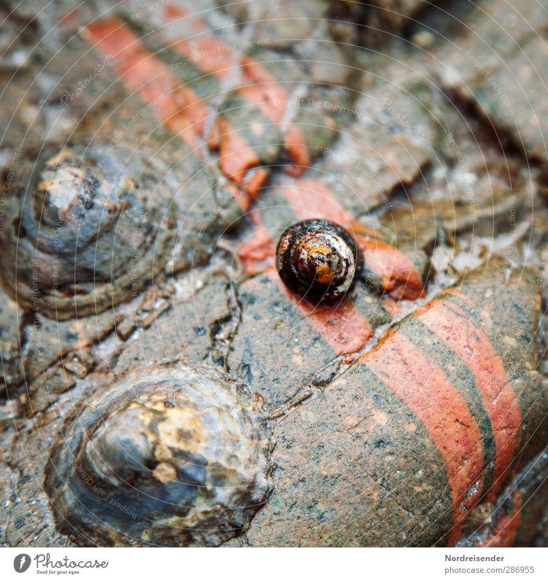 Wann kommt die Flut..... Meeresfrüchte Ferien & Urlaub & Reisen Natur Wasser Felsen Küste Tier Muschel 3 Stein Linie Streifen nass natürlich Fernweh bizarr