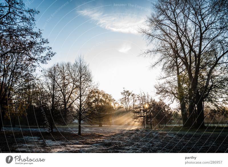 Winter Wonderland Schnee Umwelt Natur Himmel Wolken Sonne Sonnenaufgang Sonnenuntergang Sonnenlicht Herbst Schönes Wetter Baum Blatt Park blau braun gelb