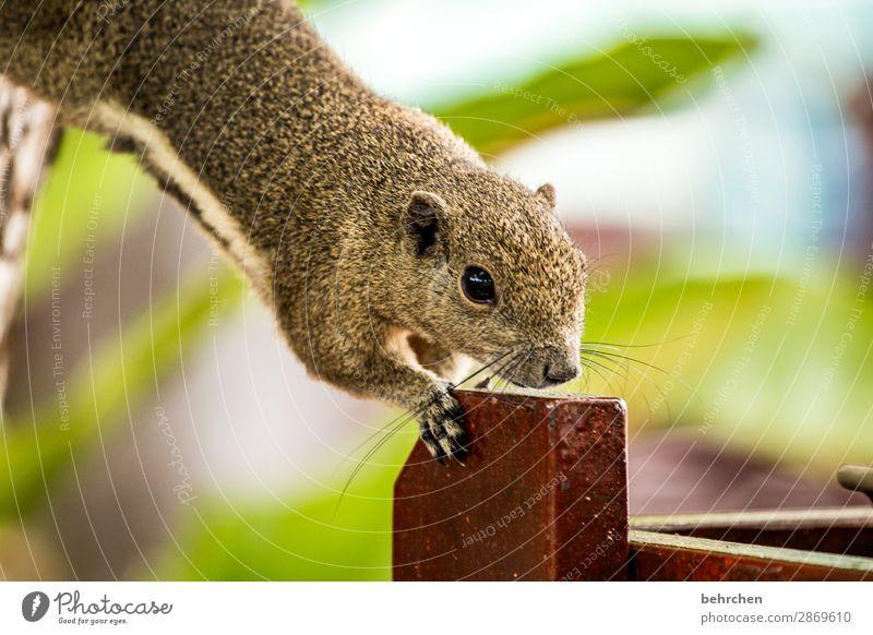 hinterhältig | frühstücksdieb Ferien & Urlaub & Reisen Tier Ferne Auge klein Tourismus außergewöhnlich Freiheit Ausflug Wildtier Abenteuer fantastisch niedlich