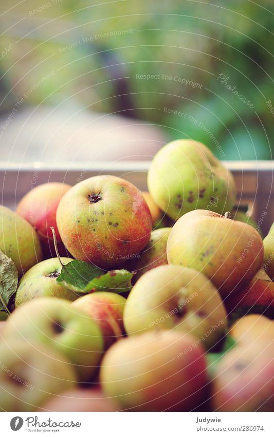 .. keeps the doctor away Natur Pflanze rot gelb Herbst Leben Garten Gesundheit Frucht Lebensmittel frisch Ernährung rund Fitness Apfel Ernte