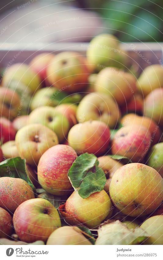 An apple a day .. Natur Pflanze rot Blatt gelb Herbst Leben Garten Gesundheit natürlich Frucht Lebensmittel frisch Ernährung rund Fitness
